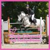 Sandra Ziegler: Pferde, Eifersucht und Stallgeflüster (Ungekürzt)